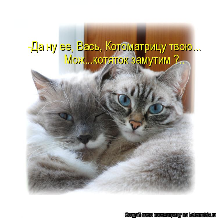 Котоматрица: -Да ну ее, Вась, Котоматрицу твою... Мож...котяток замутим ?..