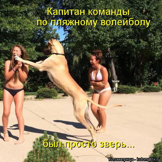Котоматрица: Капитан команды по пляжному волейболу был просто зверь...