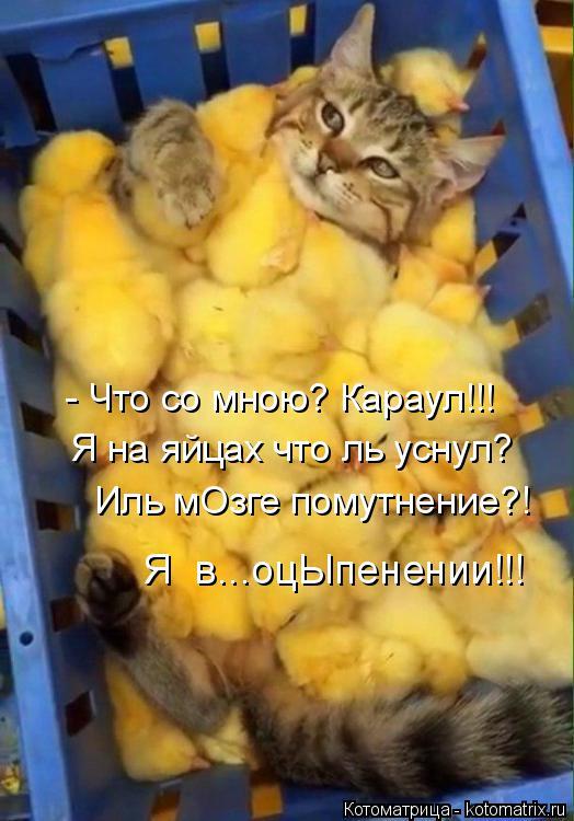 Котоматрица: - Что со мною? Караул!!! Я на яйцах что ль уснул? Иль мОзге помутнение?! Я  в...оцЫпенении!!!