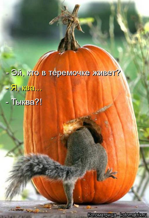 http://kotomatrix.ru/images/lolz/2017/10/29/kotomatritsa_l.jpg