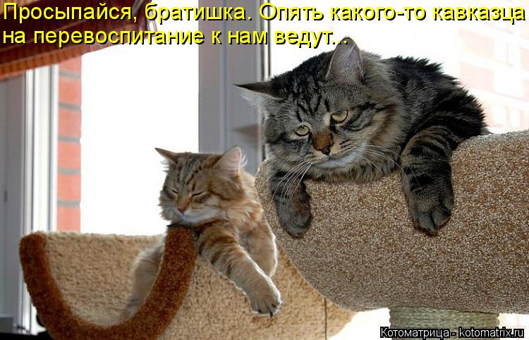 Котоматрица: Просыпайся, братишка. Опять какого-то кавказца на перевоспитание к нам ведут...