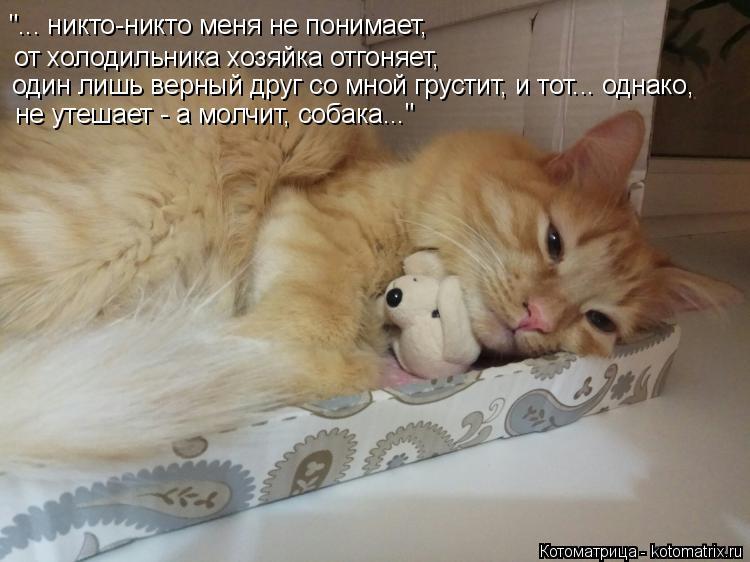 """Котоматрица: """"... никто-никто меня не понимает, от холодильника хозяйка отгоняет, один лишь верный друг со мной грустит, и тот... однако, не утешает - а молчи"""