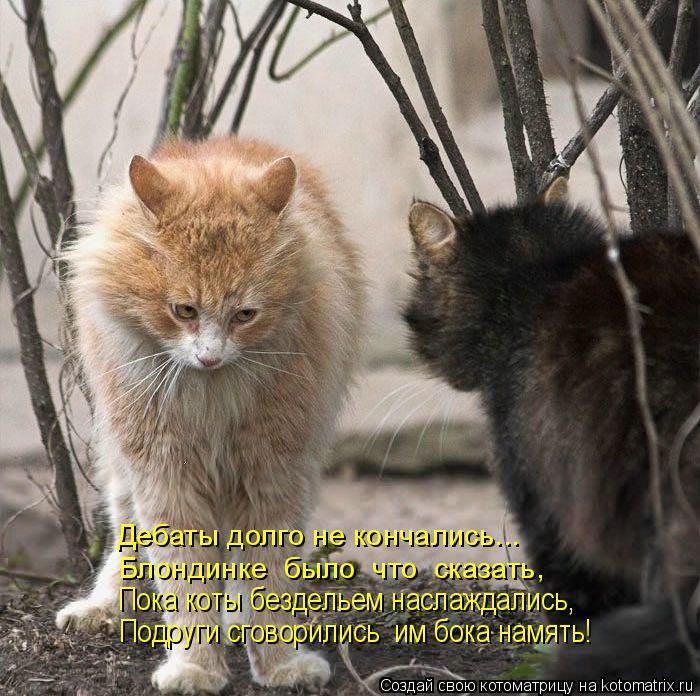 Котоматрица: Дебаты долго не кончались... Блондинке  было  что  сказать, Пока коты бездельем наслаждались, Подруги сговорились  им бока намять!