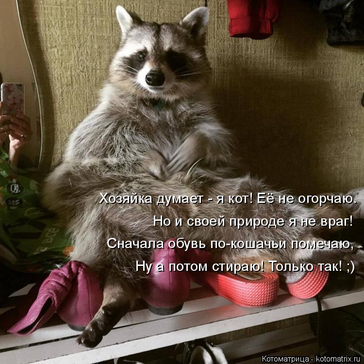 Котоматрица: Хозяйка думает - я кот! Её не огорчаю. Но и своей природе я не враг! Сначала обувь по-кошачьи помечаю, Ну а потом стираю! Только так! ;)