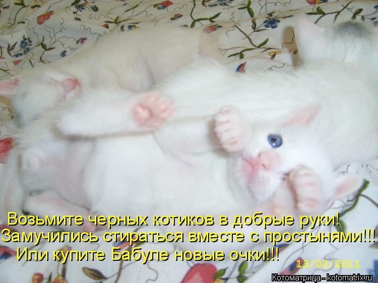 Котоматрица: Возьмите черных котиков в добрые руки! Замучились стираться вместе с простынями!!! Или купите Бабуле новые очки!!!