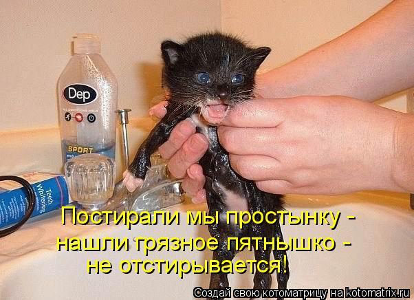 Котоматрица: Постирали мы простынку -  нашли грязное пятнышко -  не отстирывается!
