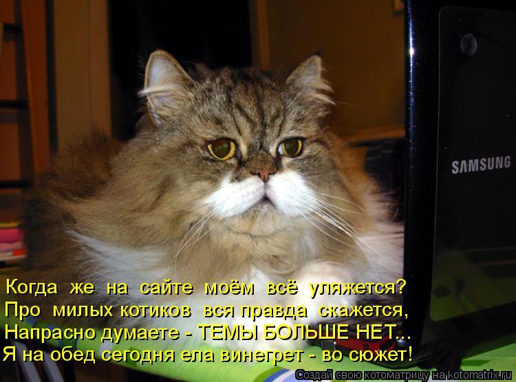 Котоматрица: Когда  же  на  сайте  моём  всё  уляжется? Про  милых котиков  вся правда  скажется, Напрасно думаете - ТЕМЫ БОЛЬШЕ НЕТ... Я на обед сегодня ела ви