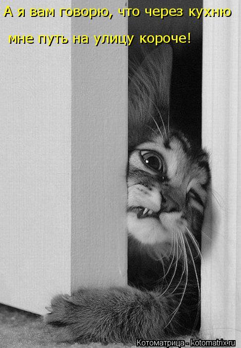 Котоматрица: А я вам говорю, что через кухню  мне путь на улицу короче!