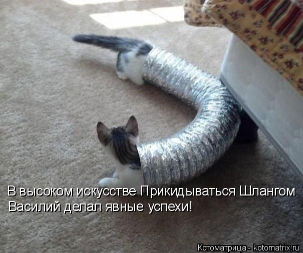 Котоматрица: В высоком искусстве Прикидываться Шлангом  Василий делал явные успехи!