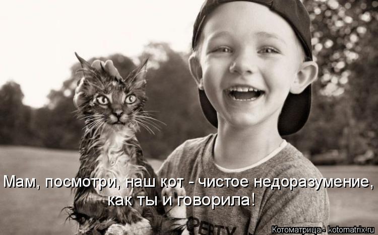 Котоматрица: как ты и говорила! Мам, посмотри, наш кот - чистое недоразумение,