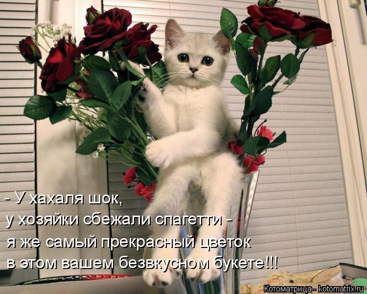 Котоматрица: - У хахаля шок, у хозяйки сбежали спагетти - я же самый прекрасный цветок в этом вашем безвкусном букете!!!