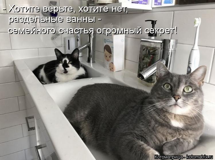 Котоматрица: - Хотите верьте, хотите нет,  раздельные ванны - семейного счастья огромный секрет!