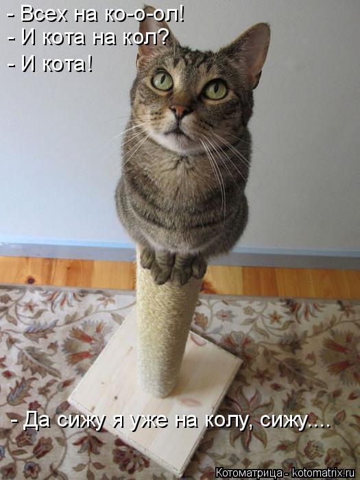 Котоматрица: - Всех на ко-о-ол! - И кота на кол? - И кота! - Да сижу я уже на колу, сижу....