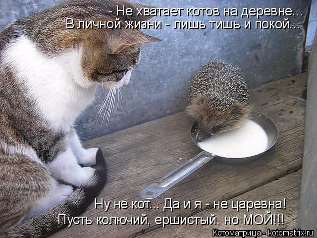 Котоматрица: - Не хватает котов на деревне... В личной жизни - лишь тишь и покой... Ну не кот... Да и я - не царевна!   Пусть колючий, ершистый, но МОЙ!!!