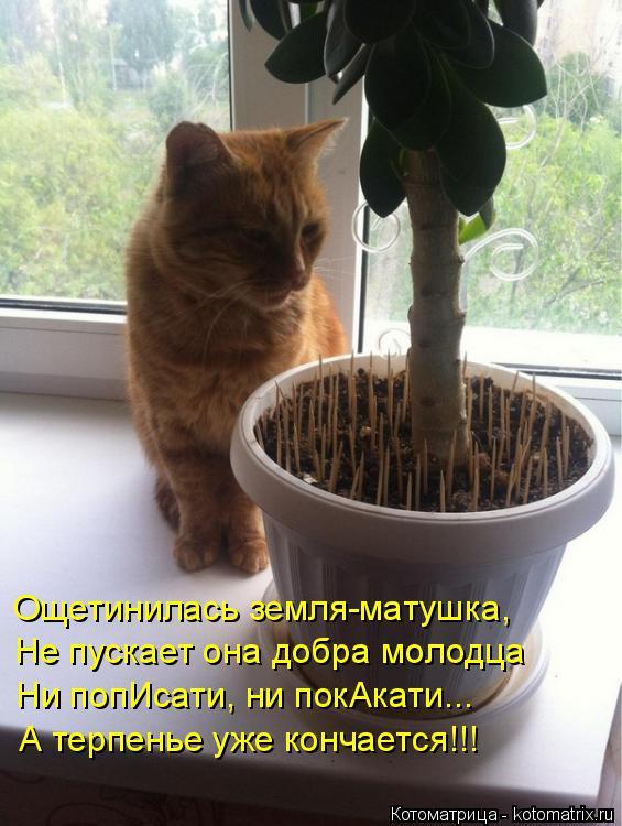 Котоматрица: Ощетинилась земля-матушка, Не пускает она добра молодца Ни попИсати, ни покАкати... А терпенье уже кончается!!!