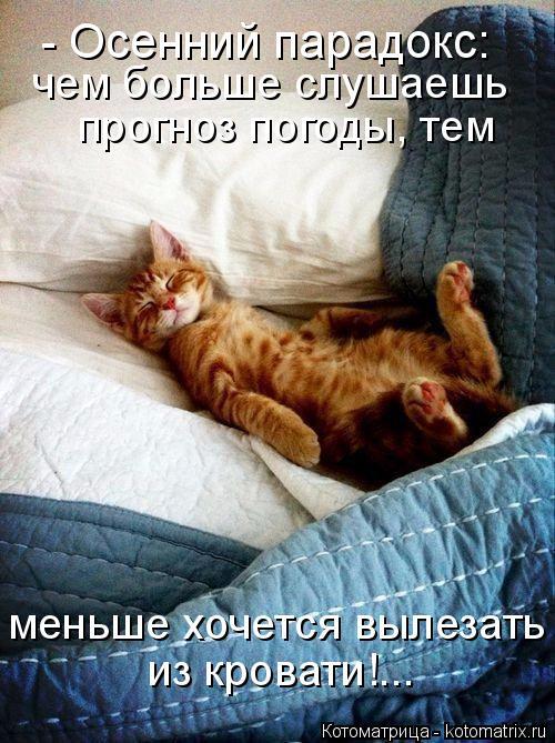 Котоматрица: меньше хочется вылезать из кровати!... прогноз погоды, тем  чем больше слушаешь - Осенний парадокс: