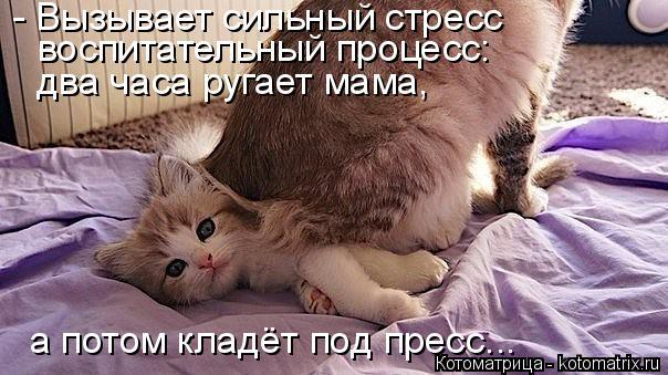 Котоматрица: - Вызывает сильный стресс воспитательный процесс: два часа ругает мама, а потом кладёт под пресс...