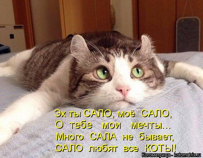 Котоматрица: Эх ты САЛО, моё  САЛО, О  тебе   мои   мечты... Много  САЛА  не  бывает, САЛО  любят  все  КОТЫ!