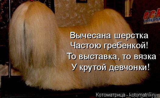 Котоматрица: Вычесана шерстка  Частою гребенкой! То выставка, то вязка У крутой девчонки!