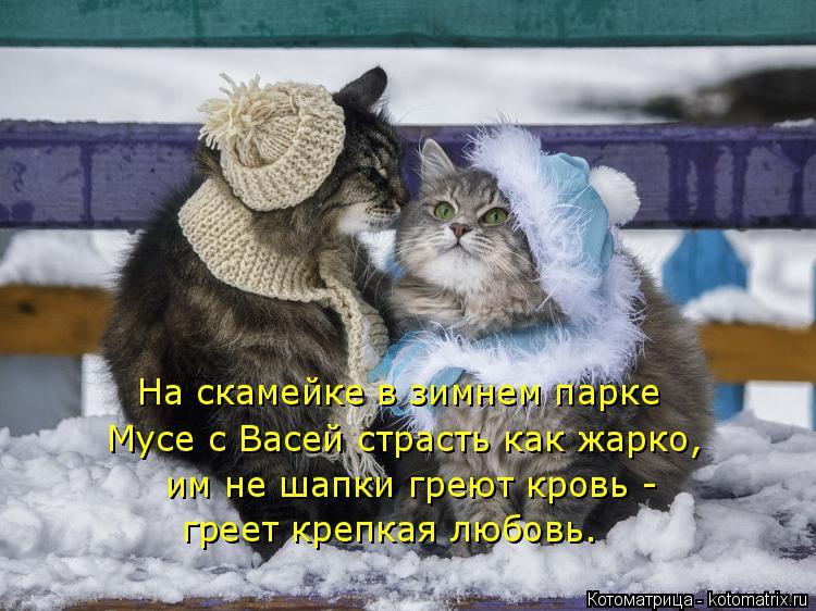 Котоматрица: На скамейке в зимнем парке Мусе с Васей страсть как жарко, им не шапки греют кровь -  греет крепкая любовь.