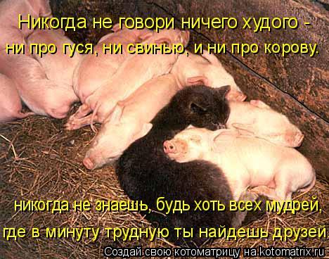Котоматрица: ни про гуся, ни свинью, и ни про корову. где в минуту трудную ты найдешь друзей. никогда не знаешь, будь хоть всех мудрей,  Никогда не говори ни