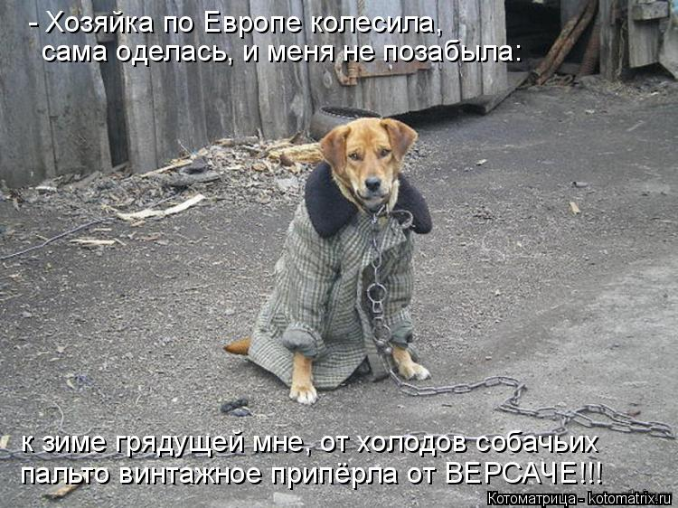 Котоматрица: к зиме грядущей мне, от холодов собачьих пальто винтажное припёрла от ВЕРСАЧЕ!!!  - Хозяйка по Европе колесила, сама оделась, и меня не позабы