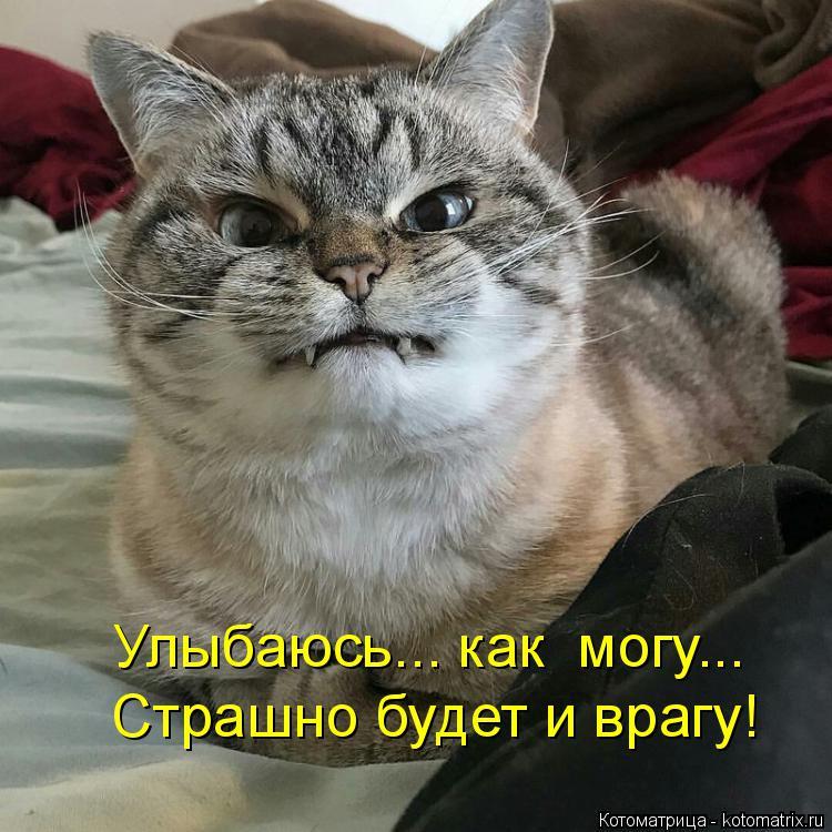 Котоматрица: Улыбаюсь... как  могу... Страшно будет и врагу!