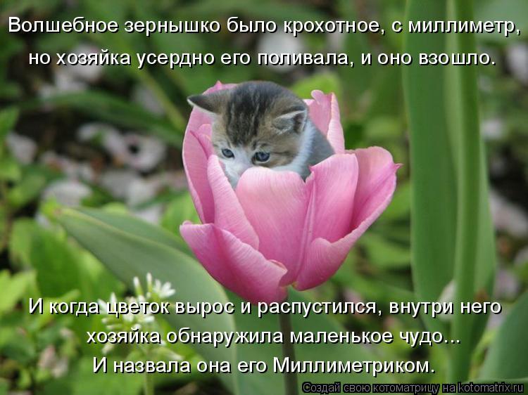 Котоматрица: Волшебное зернышко было крохотное, с миллиметр, И когда цветок вырос и распустился, внутри него хозяйка обнаружила маленькое чудо... И назва