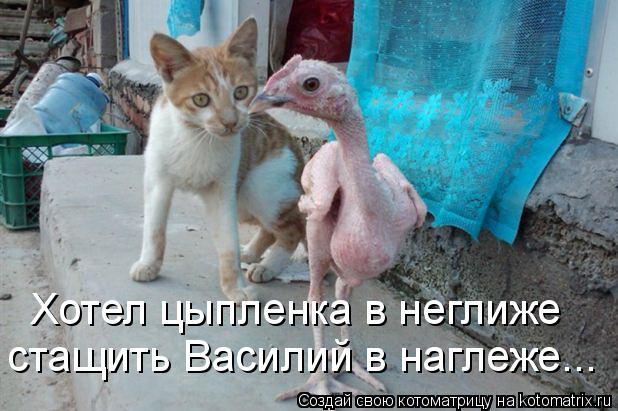 Котоматрица: Хотел цыпленка в неглиже  стащить Василий в наглеже...