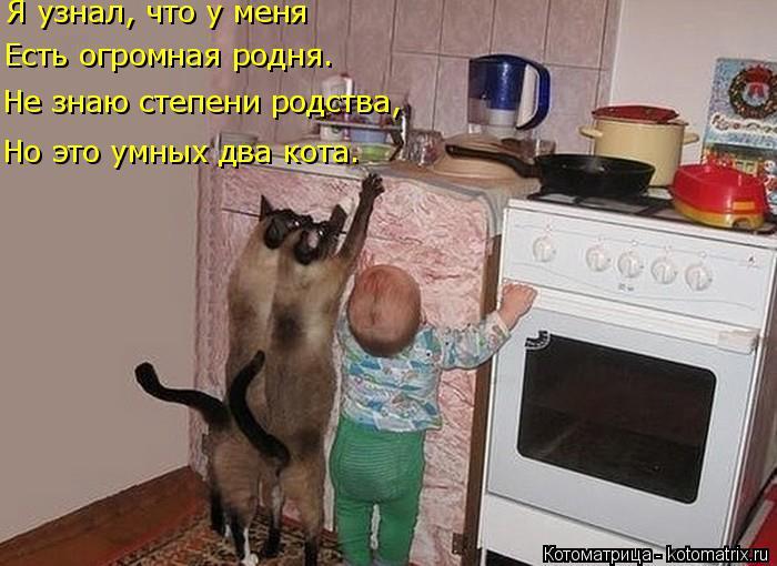 Котоматрица: Но это умных два кота. Не знаю степени родства, Есть огромная родня. Я узнал, что у меня