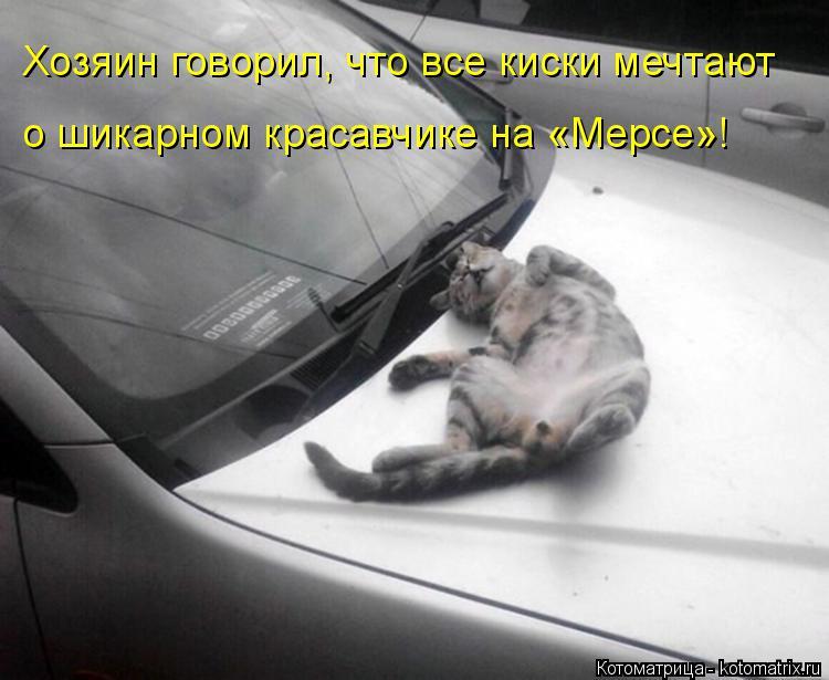 Котоматрица: Хозяин говорил, что все киски мечтают о шикарном красавчике на «Мерсе»!