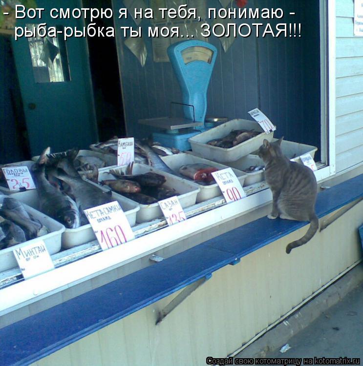 Котоматрица: - Вот смотрю я на тебя, понимаю -  рыба-рыбка ты моя... ЗОЛОТАЯ!!!