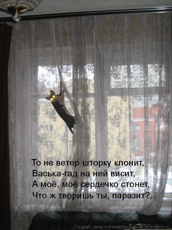 Котоматрица: А моё, моё сердечко стонет,  Васька-гад на ней висит, Что ж творишь ты, паразит?.. То не ветер шторку клонит,