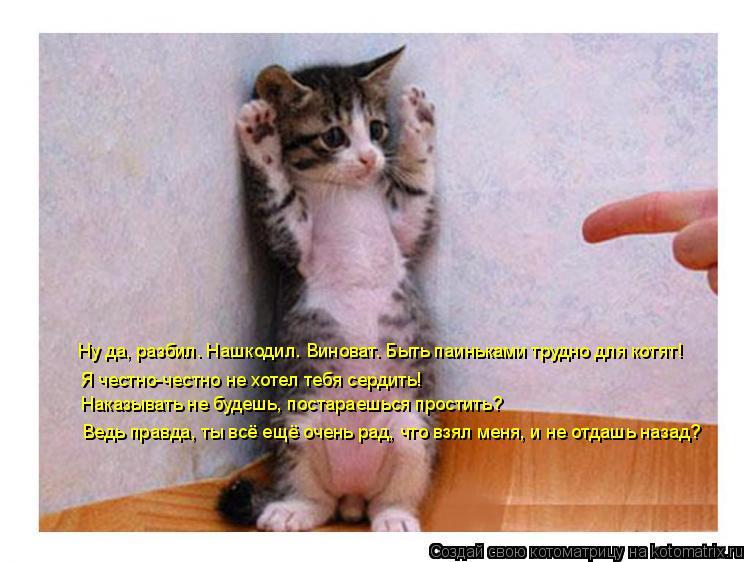 Котоматрица: Ну да, разбил. Нашкодил. Виноват. Быть паиньками трудно для котят! Я честно-честно не хотел тебя сердить! Наказывать не будешь, постараешься