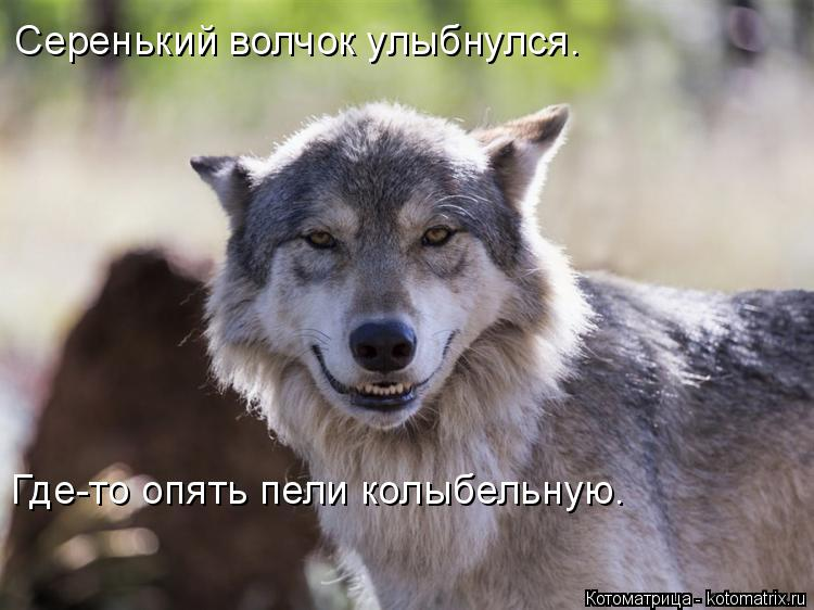 Котоматрица: Серенький волчок улыбнулся. Где-то опять пели колыбельную.