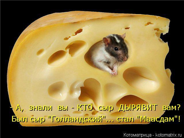 """Котоматрица: - А,  знали  вы - КТО  сыр  ДЫРЯВИТ  вам? Был сыр """"Голландский""""... стал """"Маасдам""""!"""