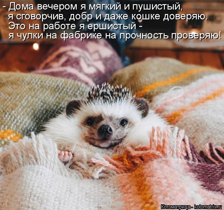 Котоматрица: - Дома вечером я мягкий и пушистый, я сговорчив, добр и даже кошке доверяю.  Это на работе я ершистый - я чулки на фабрике на прочность проверя