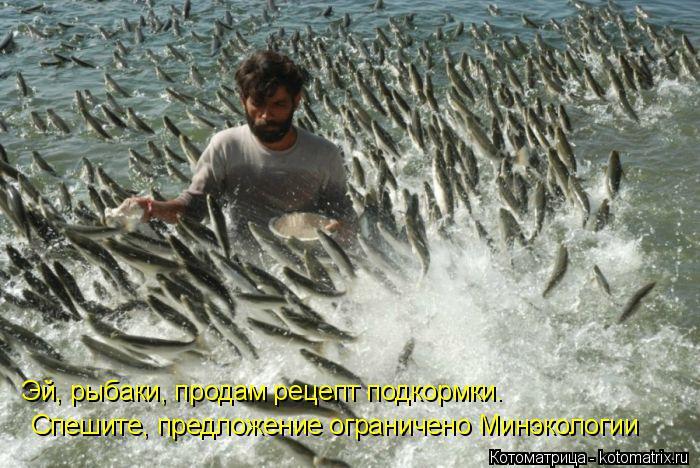 Котоматрица: Эй, рыбаки, продам рецепт подкормки.  Спешите, предложение ограничено Минэкологии