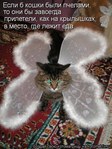 Котоматрица: Если б кошки были пчелами,  то они бы завсегда прилетели, как на крылышках,  в место, где лежит еда