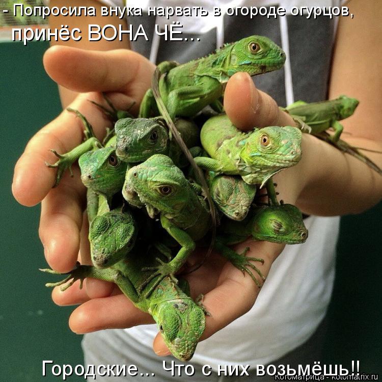 Котоматрица: - Попросила внука нарвать в огороде огурцов, Городские... Что с них возьмёшь!! принёс ВОНА ЧЁ...