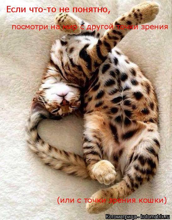 Котоматрица: Если что-то не понятно, посмотри на мир с другой точки зрения (или с точки зрения кошки)