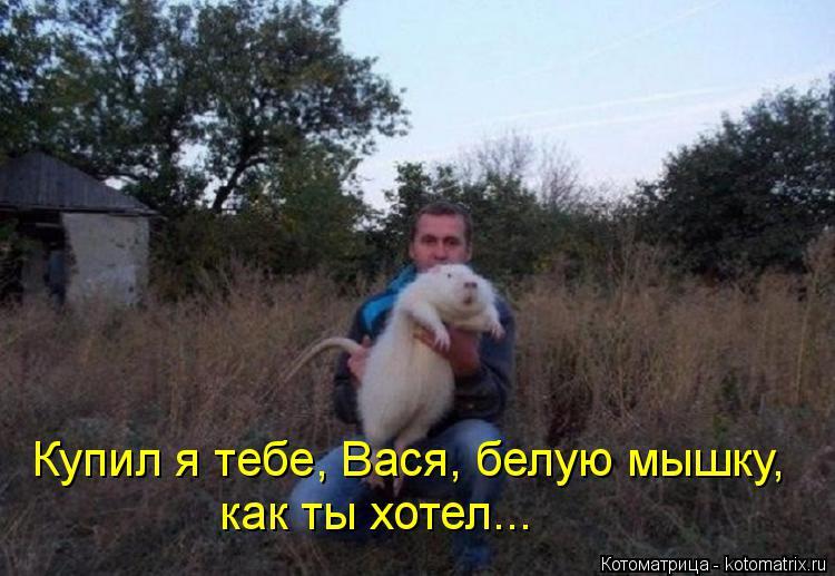Котоматрица: Купил я тебе, Вася, белую мышку, как ты хотел...