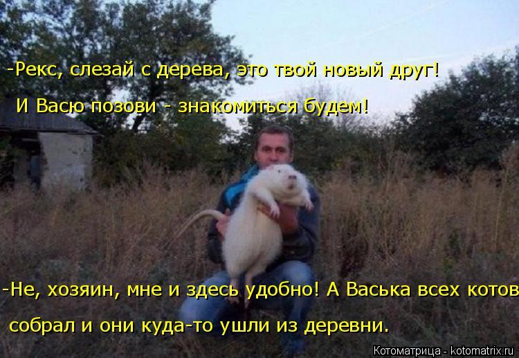 Котоматрица: -Не, хозяин, мне и здесь удобно! А Васька всех котов И Васю позови - знакомиться будем! -Рекс, слезай с дерева, это твой новый друг! собрал и они