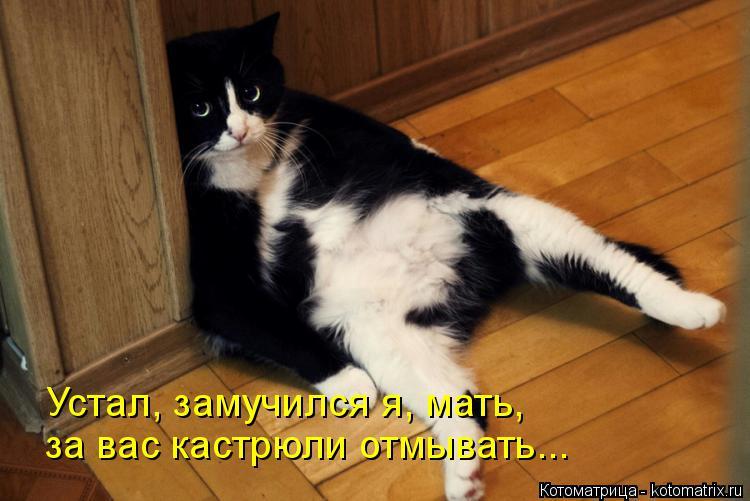 Котоматрица: за вас кастрюли отмывать... Устал, замучился я, мать,