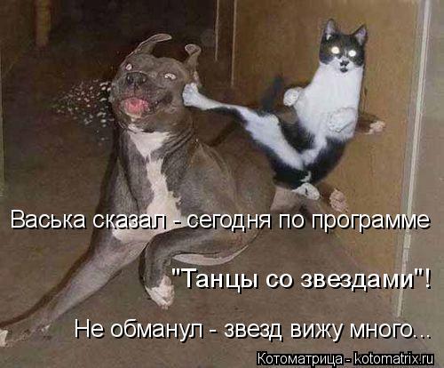 """Котоматрица: Не обманул - звезд вижу много... Васька сказал - сегодня по программе """"Танцы со звездами""""!"""