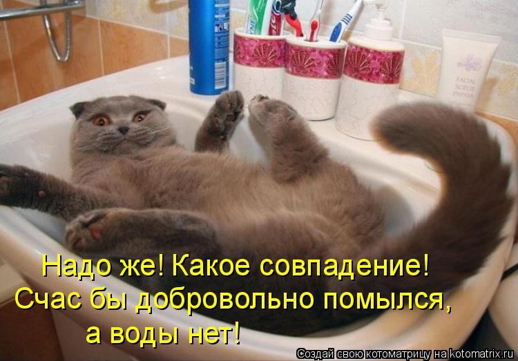 Котоматрица: Надо же! Какое совпадение! Счас бы добровольно помылся, а воды нет!