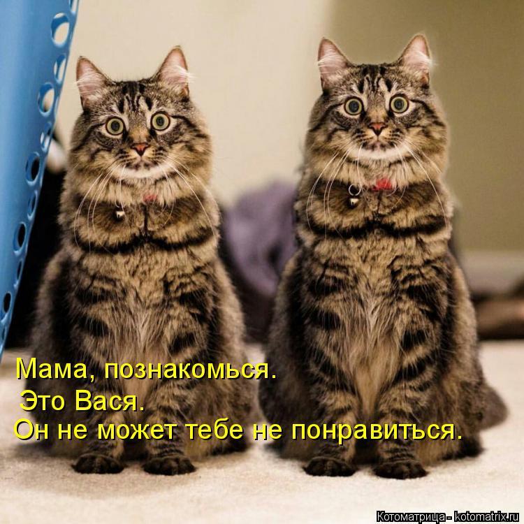 Котоматрица: Мама, познакомься. Это Вася. Он не может тебе не понравиться.