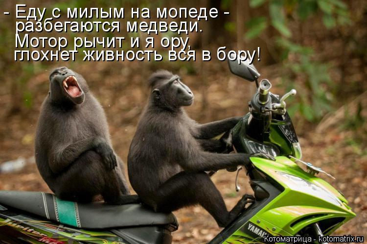 Котоматрица: - Еду с милым на мопеде - разбегаются медведи. Мотор рычит и я ору,  глохнет живность вся в бору!