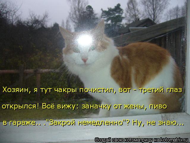 http://kotomatrix.ru/images/lolz/2017/11/21/kotomatritsa_6L.jpg