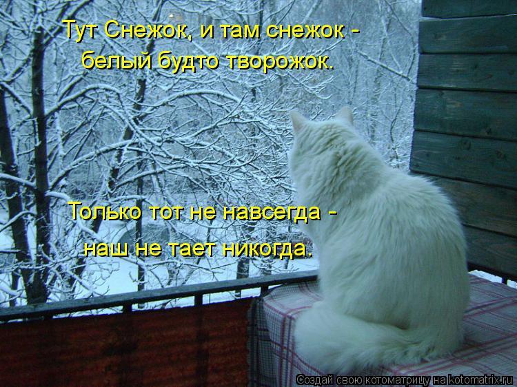 Котоматрица: Тут Снежок, и там снежок -  белый будто творожок. Только тот не навсегда -  наш не тает никогда.